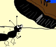 Combatere furnici