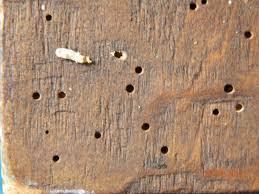 gandac de lemn