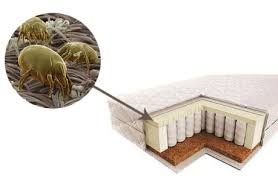 acarieni in pat