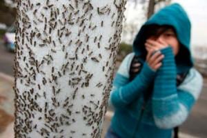 cum scap de furnici