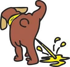urina caine