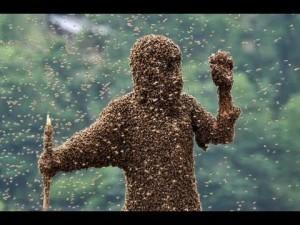 invazie insecte