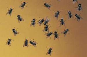 curiozitati insecte