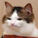 Aveti lipici de soareci pe pisica?