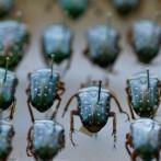 Mituri despre insecte