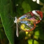 Curiozitati despre insecte si gandaci
